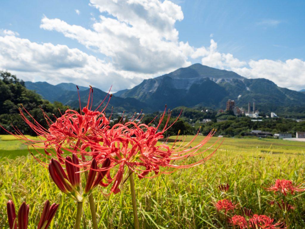武甲山と彼岸花