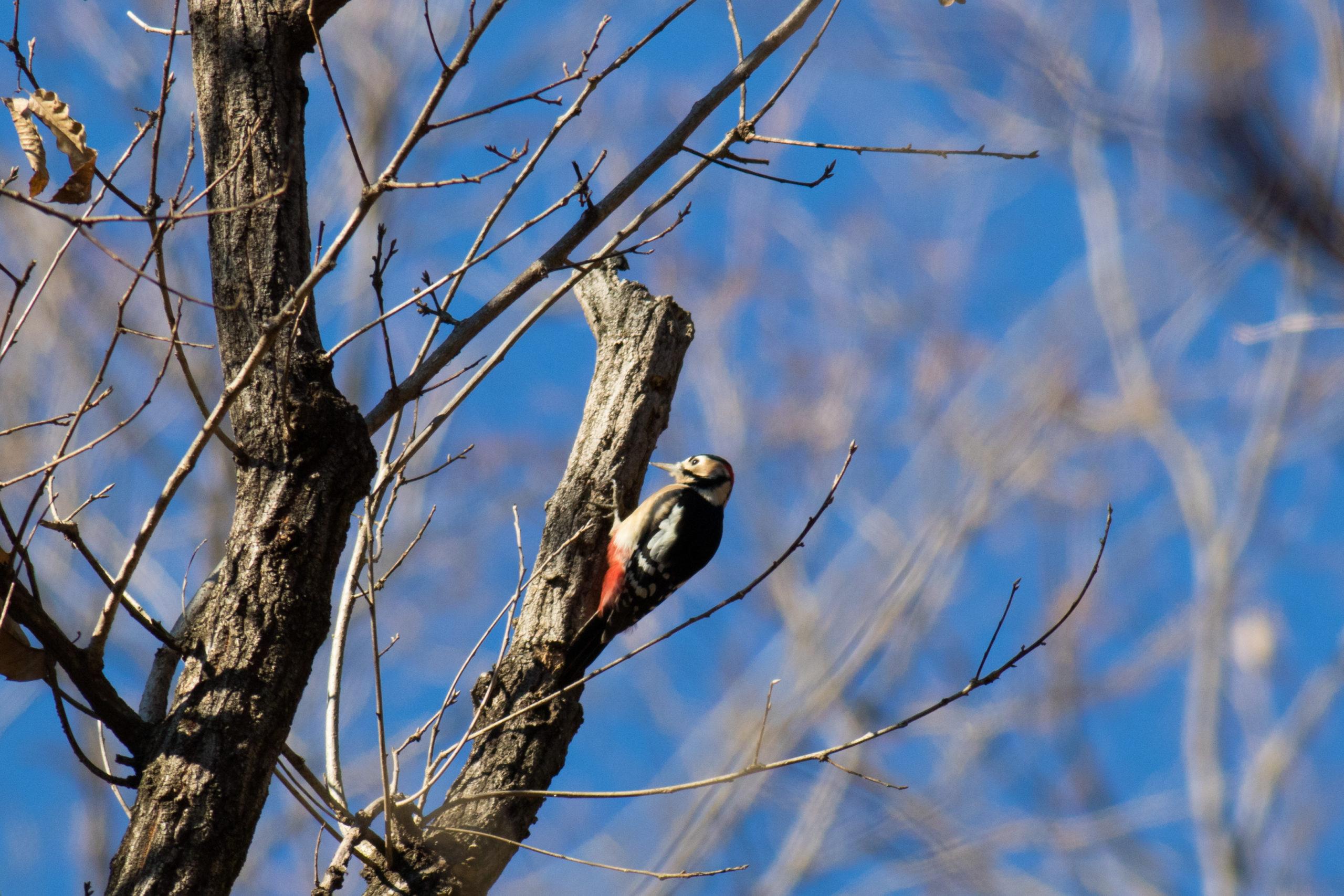 2020年秩父ミューズ―パークで冬季の野鳥撮影|立入禁止の場所が多数あるので要注意!