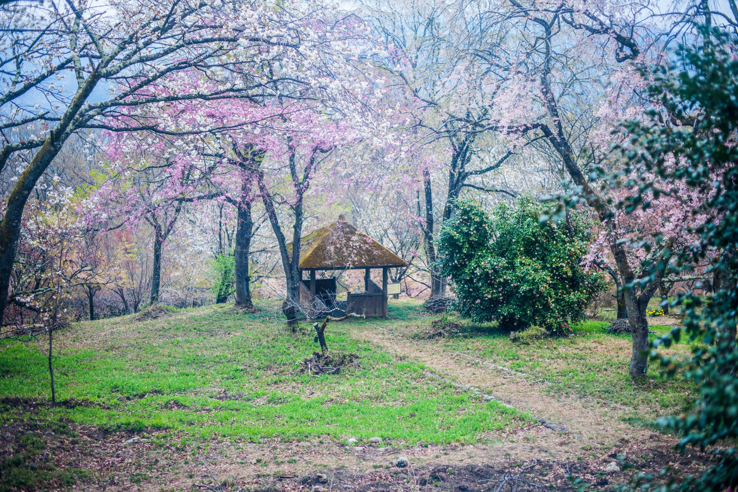 春めく田舎